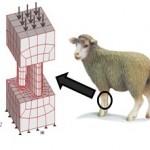 Figura 1. Ejemplo de Análisis de remodelado óseo en el cúbito y radio de una oveja. Modelo de malla, contorno y condiciones de carga usando MEC.