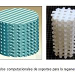 Figura 1: Modelos computacionales de soportes para la regeneración de tejido.